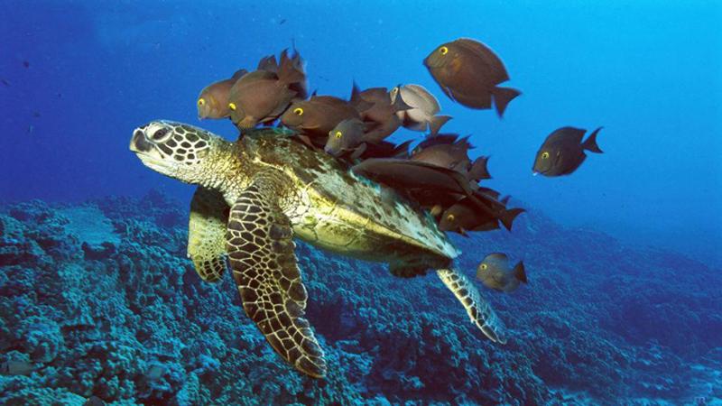 Changsha Underwater World