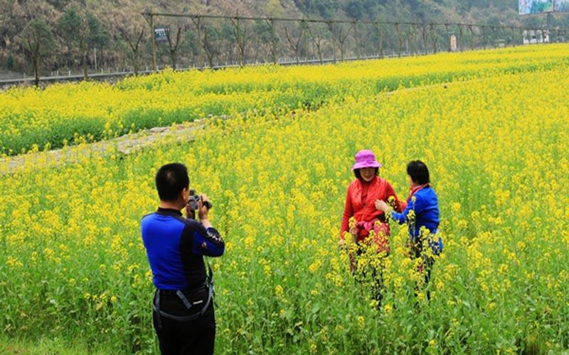 Spring Zhangjiajie